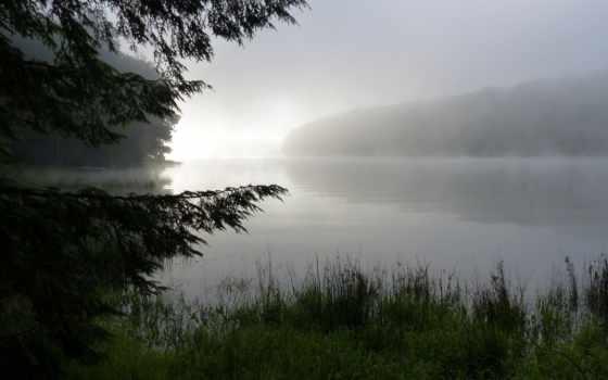 природа, туман, утро