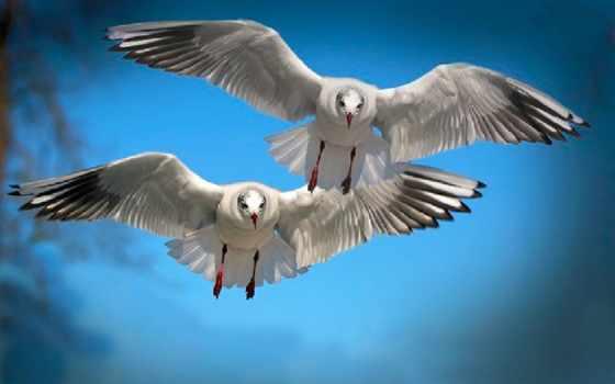 птицы, полет, разделе