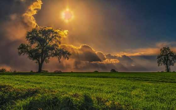 поле, sun, робочий, stil, дерево, шпалери, красивые, природа, oblaka, rays,