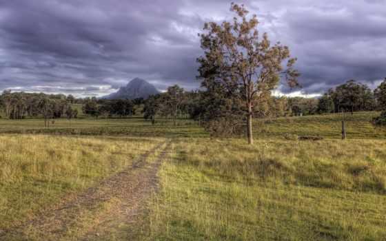 дорога, поле, gooollll, trees,