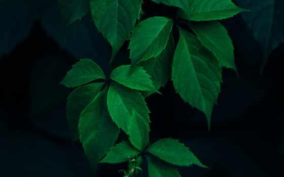 красивые, листва, зелёный, ветки, ipad, dark, cvety,
