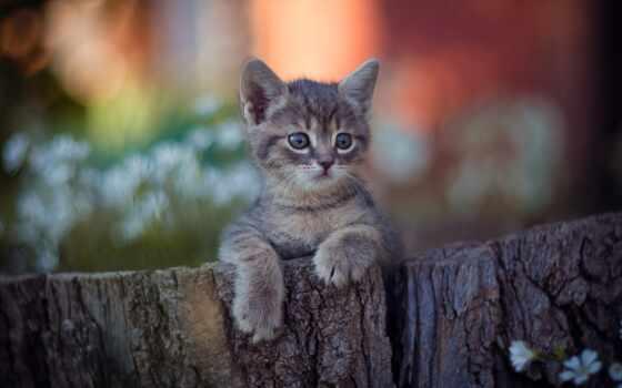 котенок, фото, foot, малыш, морда, have, кот, fun, yet, природа