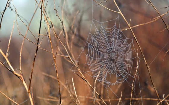 web, water, после