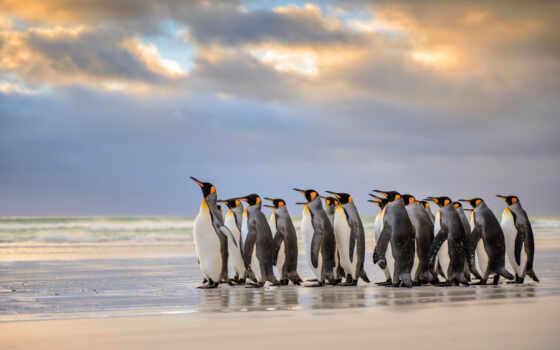 животные, penguins, нечто, природа,