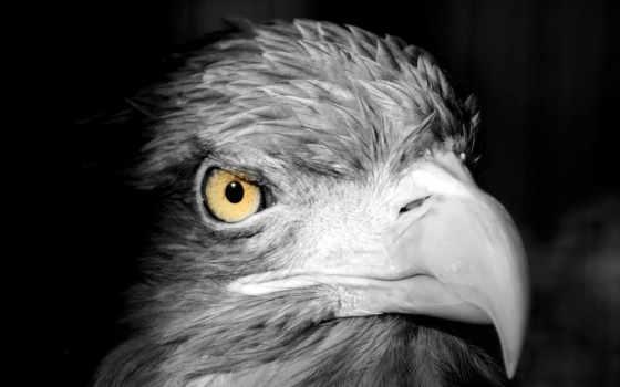 птица, клюв, голова