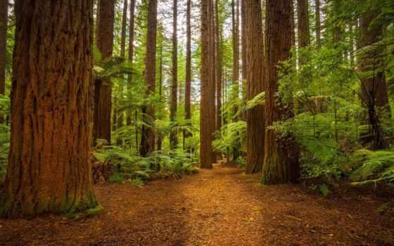 лес, monochrome, природа, white, природы, trees, машины, девушка,