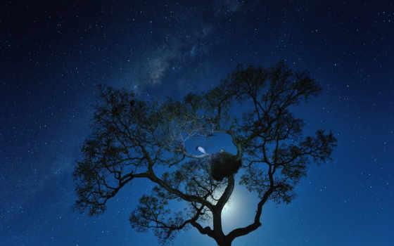 cosmos, млечный, луна, путь, ночь, звезды, птица,