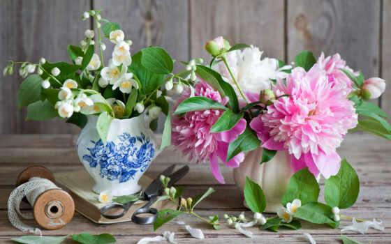 пионы, цветы, картинка, пион, жасмин,