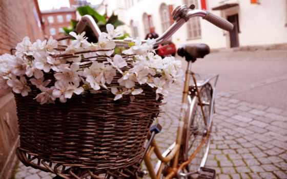 cvety, bike, цветами, темы, шаблон, подборка, велосипеды, ish, цветов,