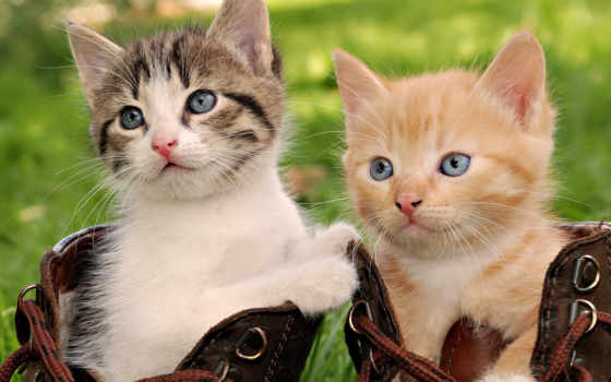 кот, котята, cats, кошки, смешные, las, cute, boots,