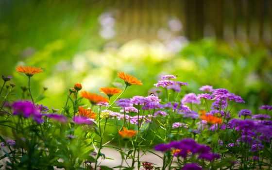 cvety, полевые, красивые, цветов, полевых,