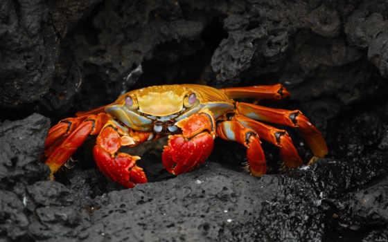 crab, камни, клешни