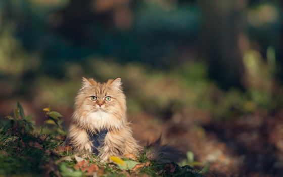 loading, кошки, kpbimhaiii, страница, кот, загружено, уже, телефон, шерсть,