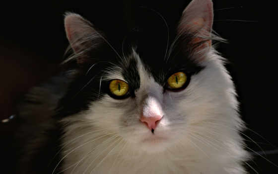 gt, 宠物猫猫图片