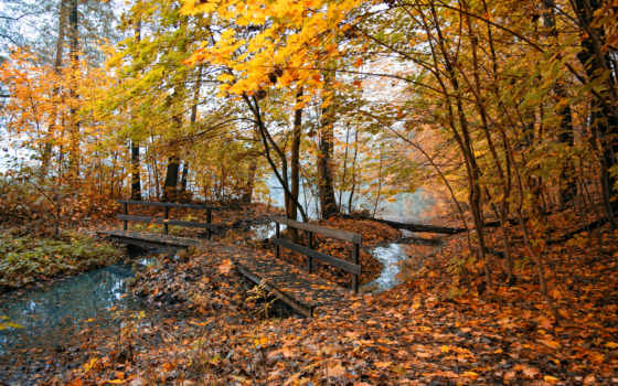 природа, листья