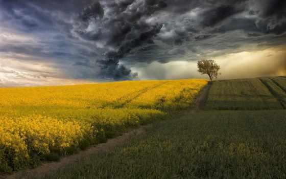 буря, поле, рапс, тучи, природа, небо, грозы, дерево, fone, corn, цветущее,