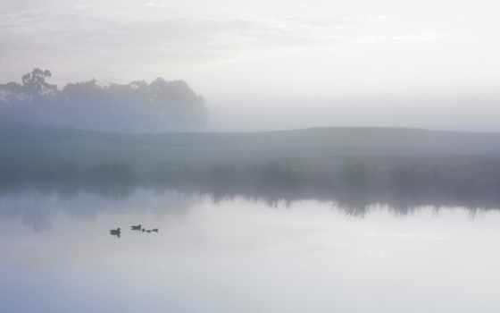 пруд, misty, ducks, lion, mac,