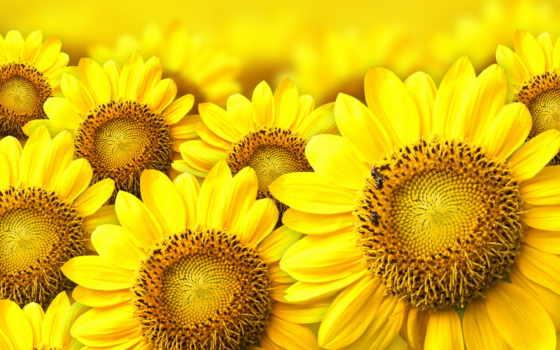 красивые, devushki, весна, цветом, понравилось, желтые, желтым, cvety, весенние,