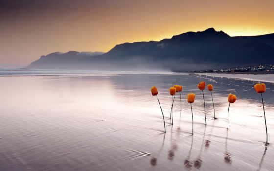 цветы, море