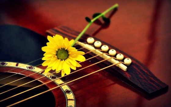 гитара, музыка, цветы