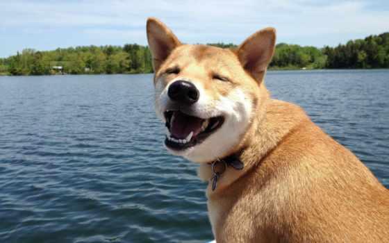 собака, улыбака