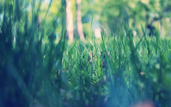 весна, утро, park