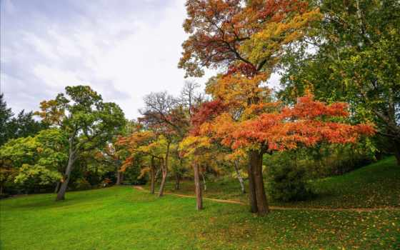 осень, garden, природа, дерево, trees, seasons, лес, трава,