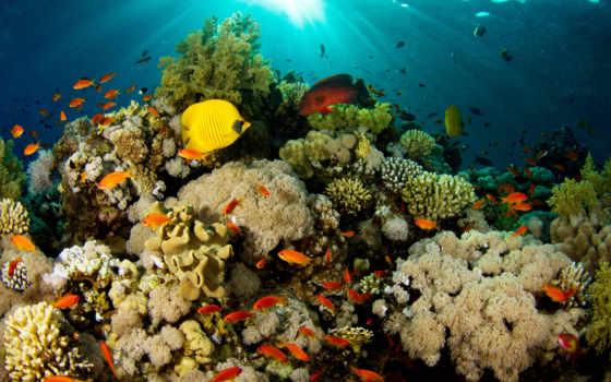 океане, туры, ocean, атолл, мировом, океана, которые, море, мужской,