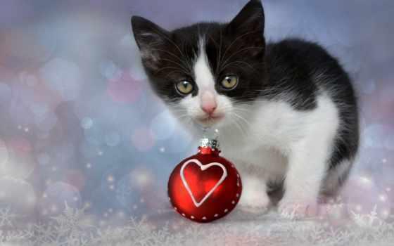 кот, sunday, фото, christmas, сердце, www, demokot, you