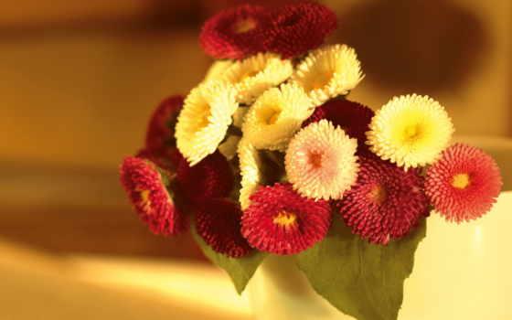 flowers, گل