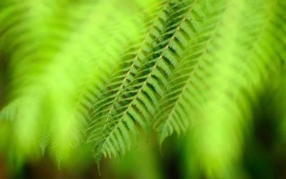 heart, greenery, hojas, helechos, imágen, naturaleza,
