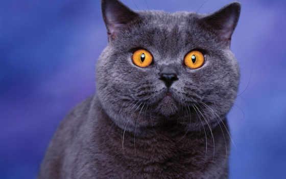 кошек, пород, породы