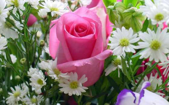 rosas, pinterest, google