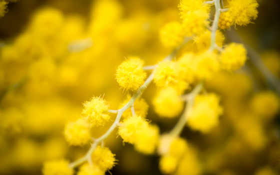 flowers, desktop, photography, цветы, are, themes, yellow, blurred,