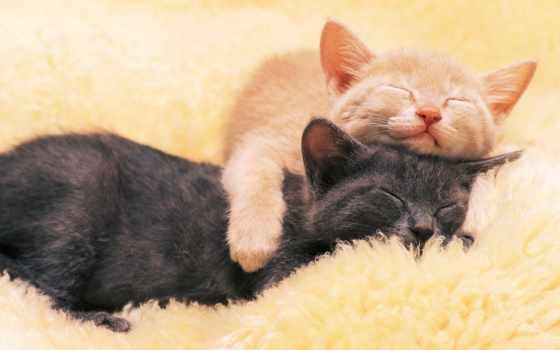 котята, спят, red, black, сладко, обнимку,