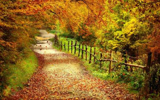 осень, trees, landscape, лес, листва, тропинка, забор, дерево,