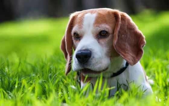 собака, яndex, коллекциях, два, некогда, собак, breeds, весь, ежика,