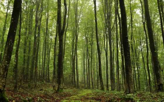 makulatura, лес, природа, fore, другие, лиственный, разница, площадь, tropical, дорогой, evergreen