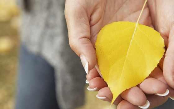 жёлтый лист в женских ладонях