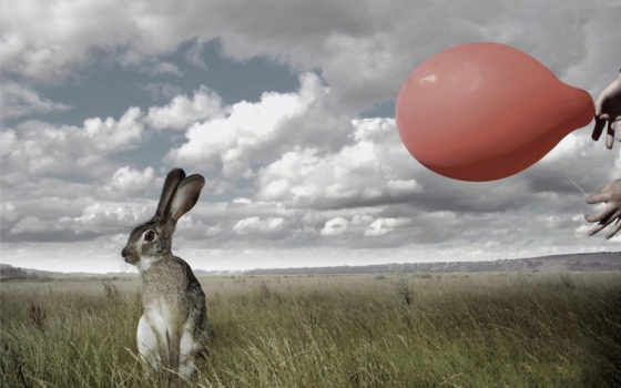 кролик, природа