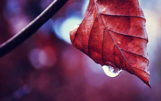 осень, water