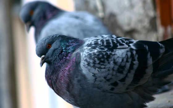 голуби, категории, осень