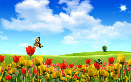 summer, природа, небо, бабочки, тюльпаны, цветы,