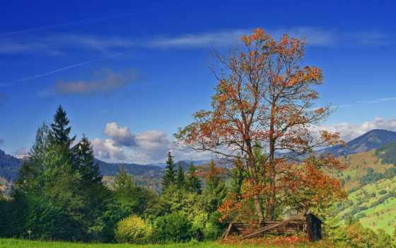осень, природа, trees, romanian, елки, горы,