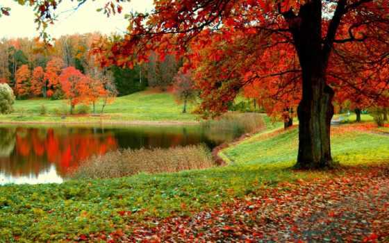 санкт, петербург, осень, лес, аgreshnov,