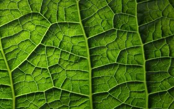 зелёный, leaf, текстура