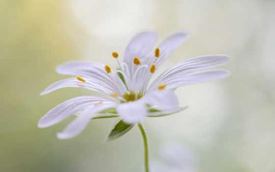 photos, cvety, browse, flickr, goodfon, picssr, pétalas,
