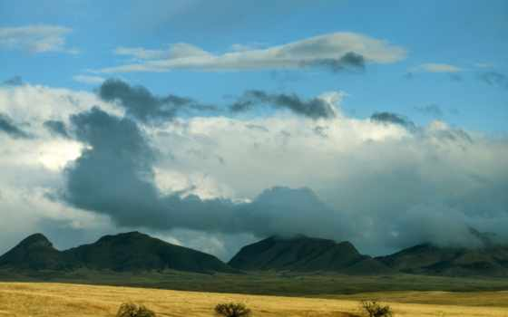 arizona, national, лес