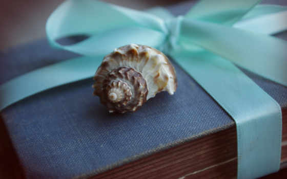 seashell, browse, bmw, море, песок, water, рука, камни, свет, макро, взгляд,