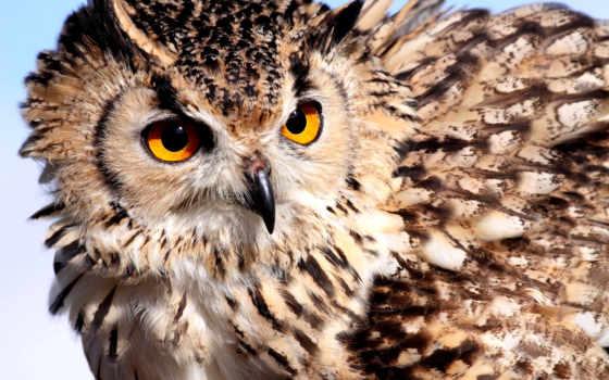 филин, сова, перья, птица, свет, крылья, окрас, высоком,